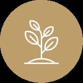 Bruine cirkel met groeiende boom in