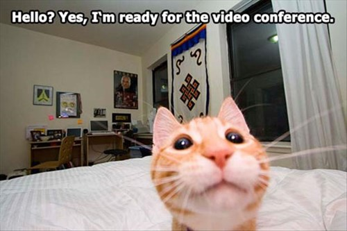 Video call cat meme