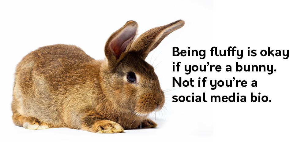 Fluffy bunny social media bio